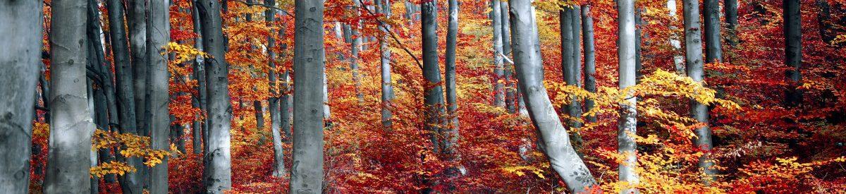 art-autumn-autumn-leaves-589819