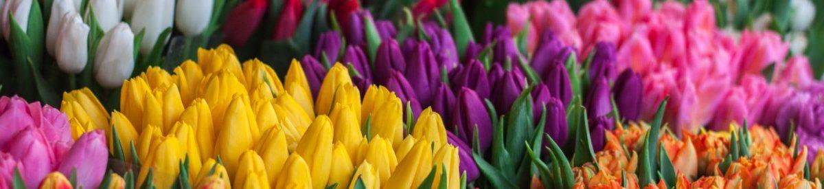 beautiful-bloom-blooming-343957