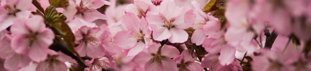 bloom-blossom-branch-701816